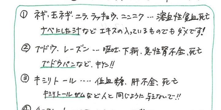 2017年11月度わんちゃんコラム(6歳以下)