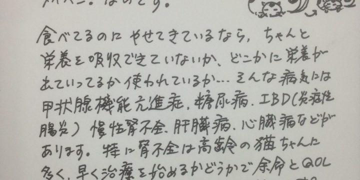 2013年4月度猫ちゃんコラム
