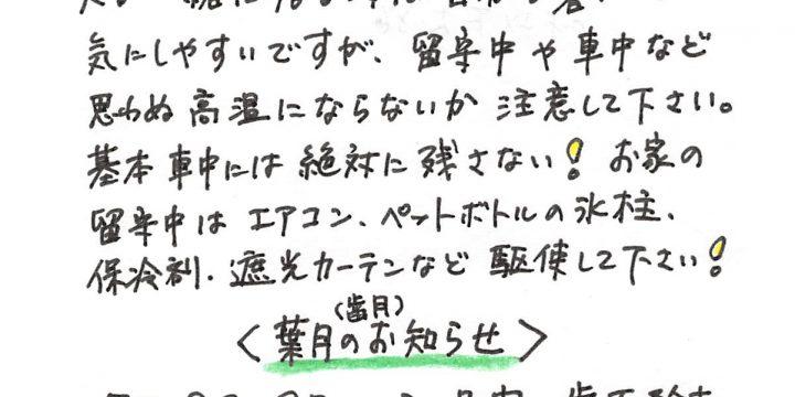 2018年8月度わんちゃん・ねこちゃんコラム(6歳以下)