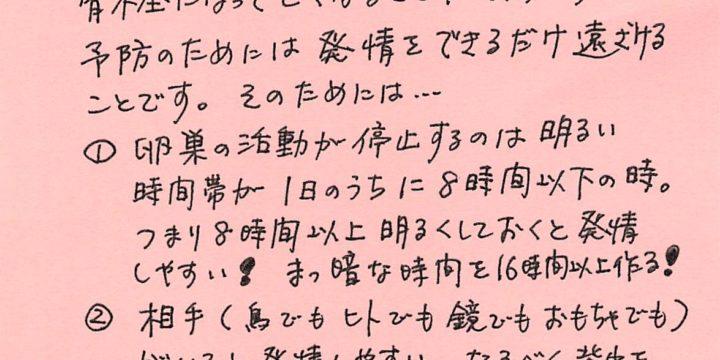 2019年3月度小鳥ちゃんコラム