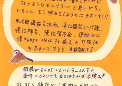 2019年9月度ねこちゃんコラム(7歳以上)